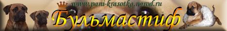 БУЛЬМАСТИФ-король среди собак ! Сайт о самых лучших представителях королевства собачьего мира Бульмастифах Пани Красотке (Гере), Зене, Младе. Также Вы сможете найти на сайте обширную фотогалерею и информацию о продаже  элитных щенков.